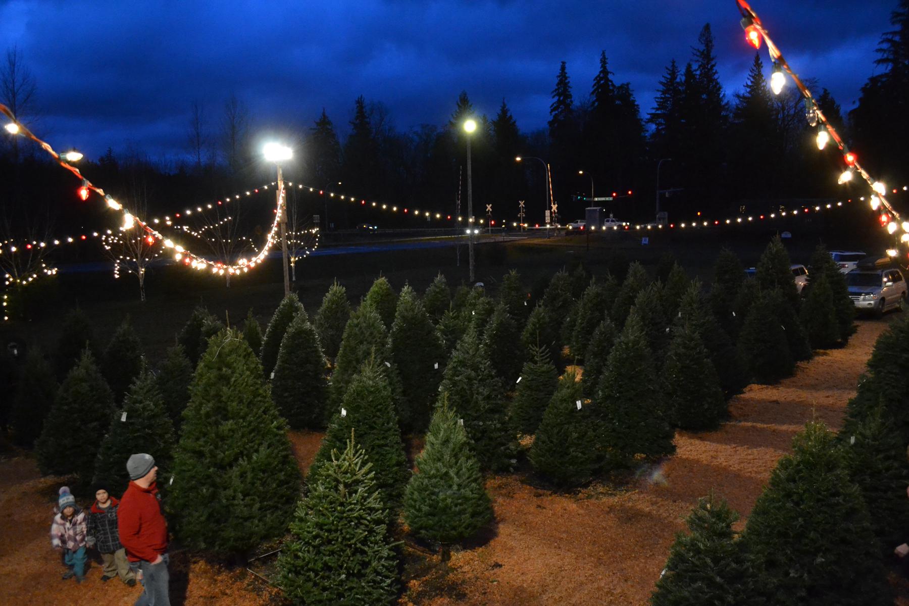 Crew #115 Christmas Trees